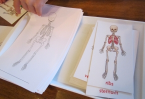 Early Elementary Anatomy Study At Home