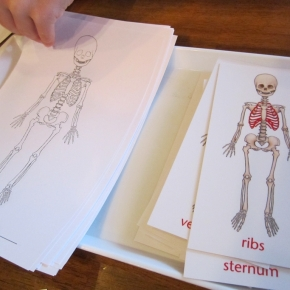 Early Elementary Anatomy Study AtHome